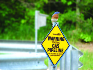 Read more about the article Opinion: Bd. of Public Works Should Reject Controversial Pipeline Proposals